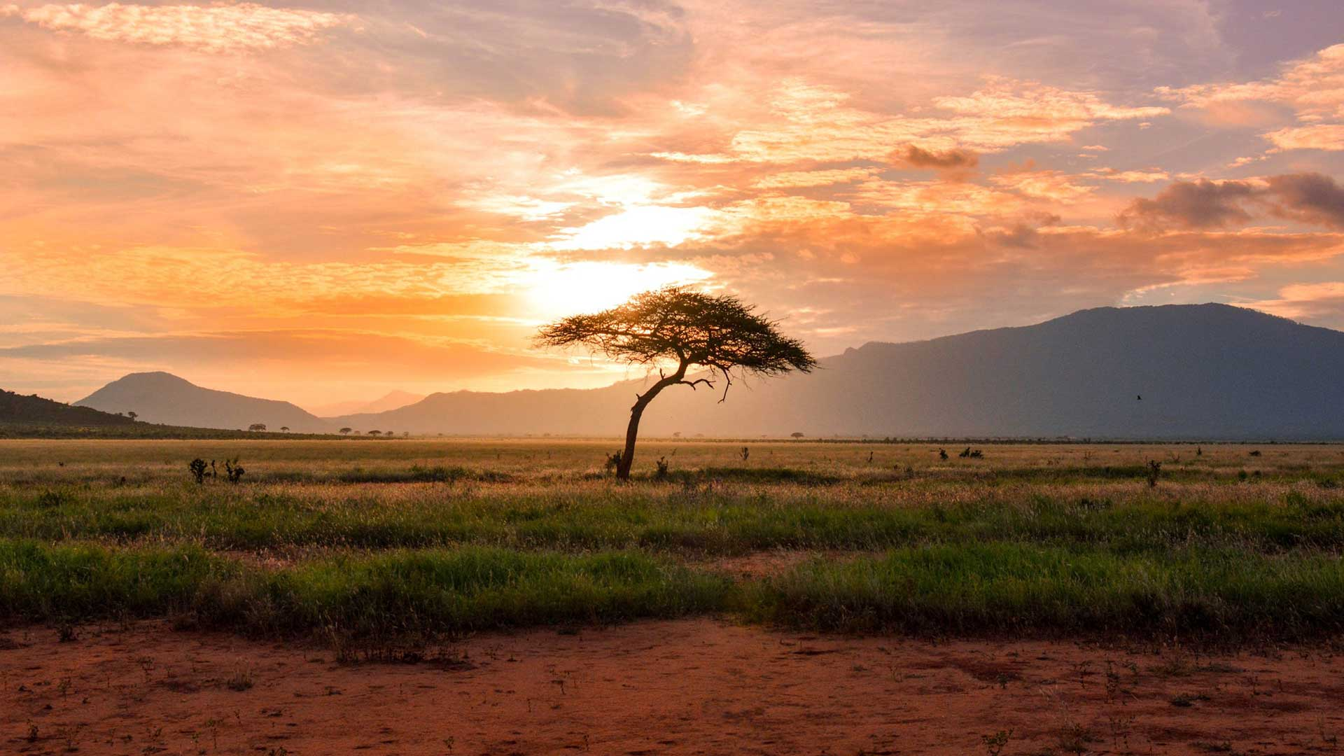 Read more about the article CURIOCITY CULTURE: Don't believe these eight myths about travel in Africa